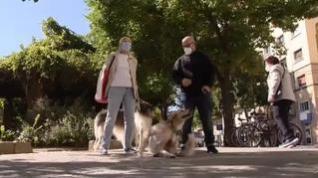 'Covid' gana popularidad como nombre entre las mascotas españolas