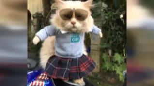 La moda para gatos arrasa en Instagram