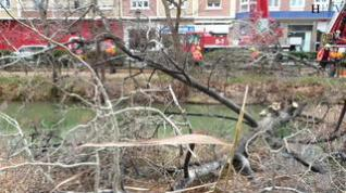 Los Bomberos de Zaragoza retiran un árbol que cayó al canal durante el temporal de nieve