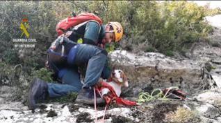 Rescatan a un perro de caza que se quedó enriscado en Nueno