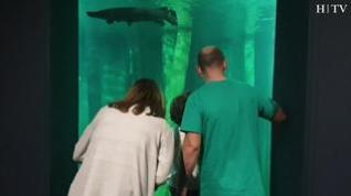 Gran acogida a la reapertura del Acuario de Zaragoza