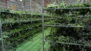 La Guardia Civil interviene más de 4 toneladas de marihuana en Villel