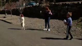 Un perro aprende a andar como los humanos tras sufrir un atropello