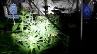 Un incendio en una vivienda destapa una plantación indoor de marihuana