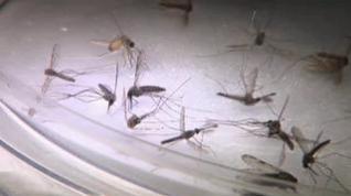 Una posible nueva vacuna contra la malaria demuestra ser altamente efectiva en un ensayo en bebés en África