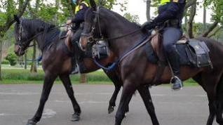 La patrulla de corceles que vigila Zaragoza