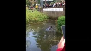 Sacrifican a la ballena varada en el Támesis para evitarle más sufrimiento