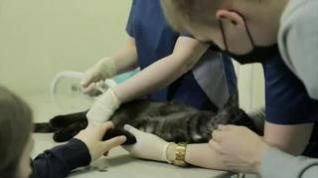 Rusia empieza a vacunar animales contra el coronavirus