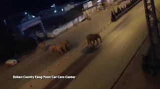 La insólita imagen de una manada de elefantes cruzando en medio de una ciudad china