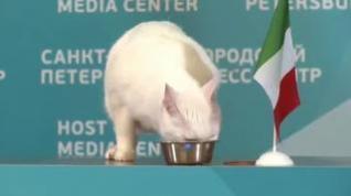 El gato ruso Aquiles pronostica la victoria de Italia sobre Turquía en la Eurocopa