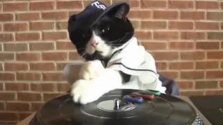 El gato DJ que despierta a los vecinos de Lugo