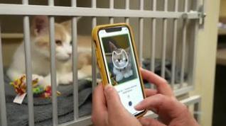 'Tably', la app móvil que descubre el estado de salud de tu gato