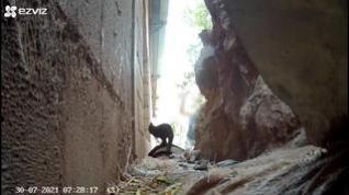 Denunciado un vecino de Brea de Aragón por un supuesto caso de maltrato animal