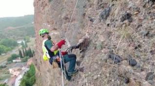 La Guardia Civil de Tarazona rescata a un buitre atrapado en una pared vertical en Los Fayos
