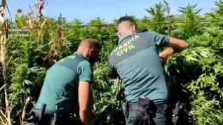 Descubierta una plantación de Marihuana en un huerto de Binéfar