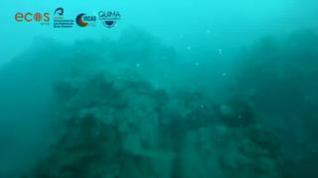 Primeras imágenes de la fajana dentro del agua