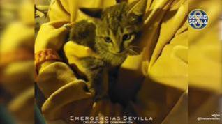 Los bomberos de Sevilla rescatan a un gatito atrapado en el motor de un coche
