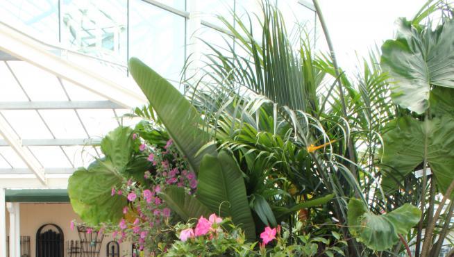 Flores en un centro de jardinería