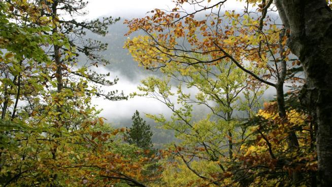 Una cortina de árboles y montañas...