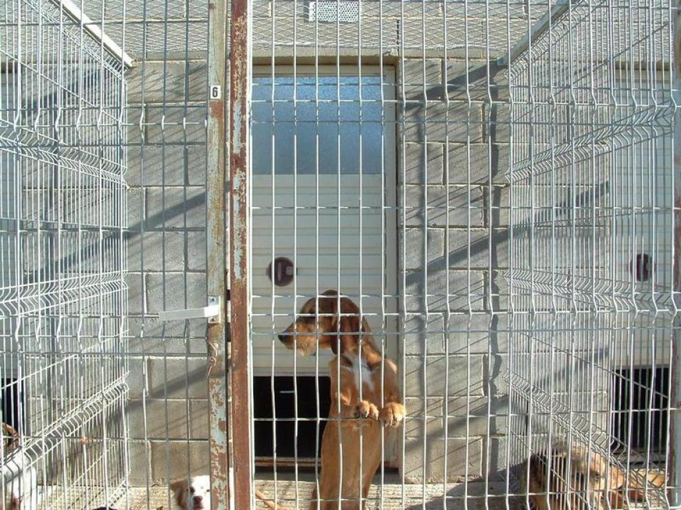 Dependencias de la perrera provincial en la carretera de Fornillos de Huesca