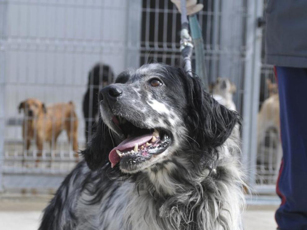 Un perro en la perrera municipal de Huesca
