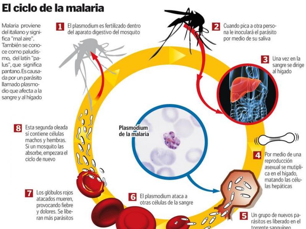 Gráfico que muestra el ciclo de la malaria