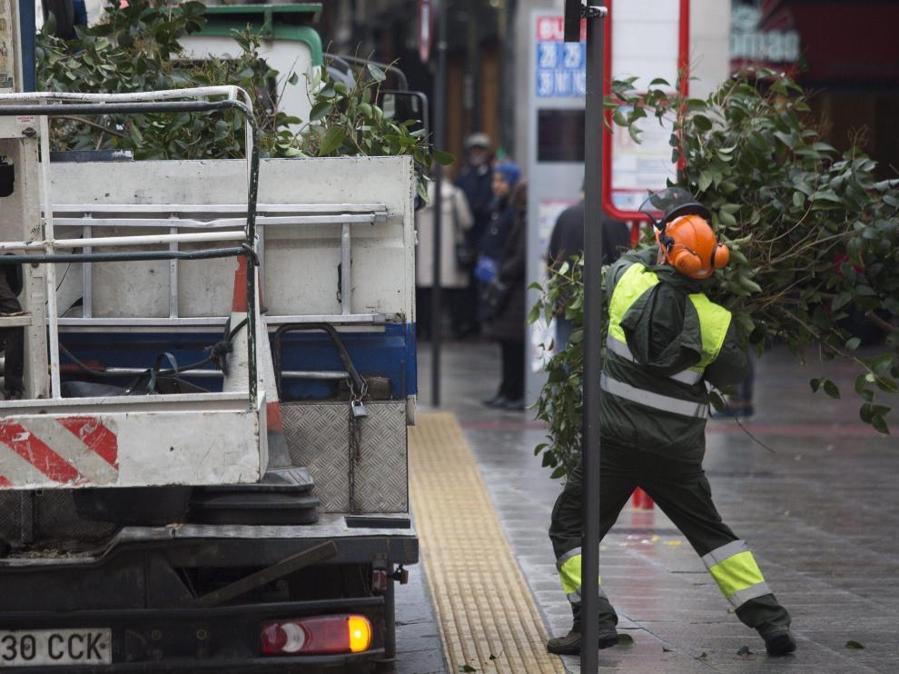 Un operario de FCC Parques y Jardines realiza labores de limpieza de ramas.