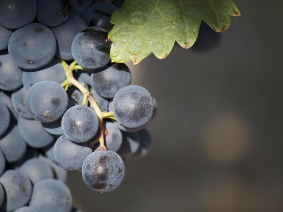 Imagen de archivo de unos viñedos.