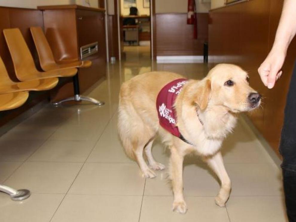 Bob, el perro que ayuda a las víctimas de violencia de género en Tarragona.