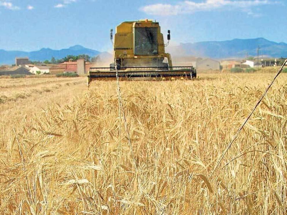Cosecha de cereal en la Hoya de Huesca.