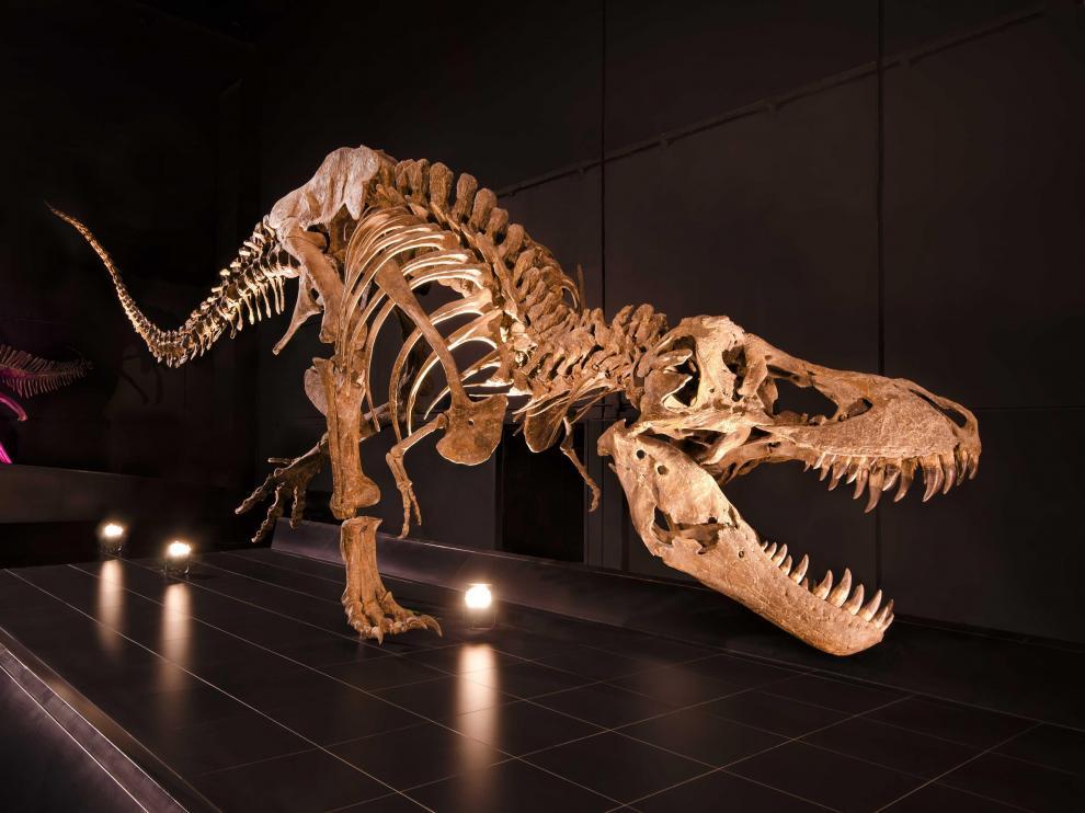 Esqueleto de un 'Tyrannosaurus rex'.