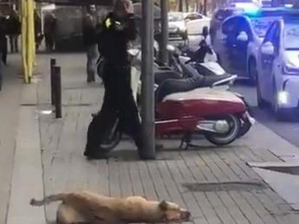 El perro abatido por un agente de la Guardia Urbana de Barcelona.