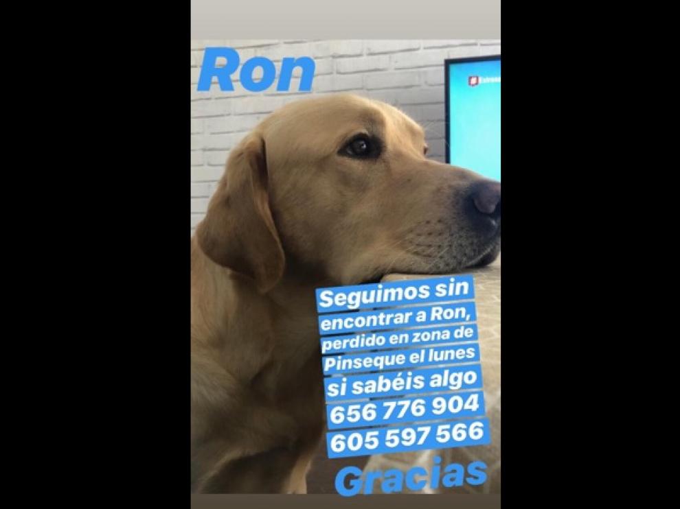 Su dueña pide ayuda para localizar a su perro.