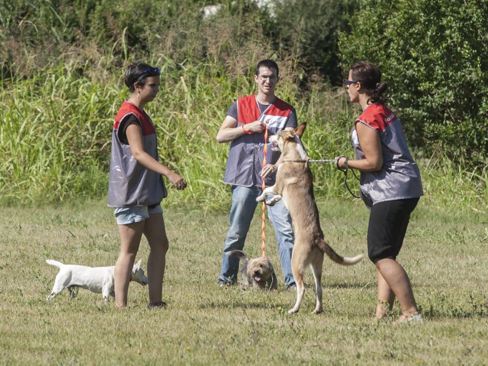 Imagen de archivo de un paseo con perros del Centro de Protección Animal.