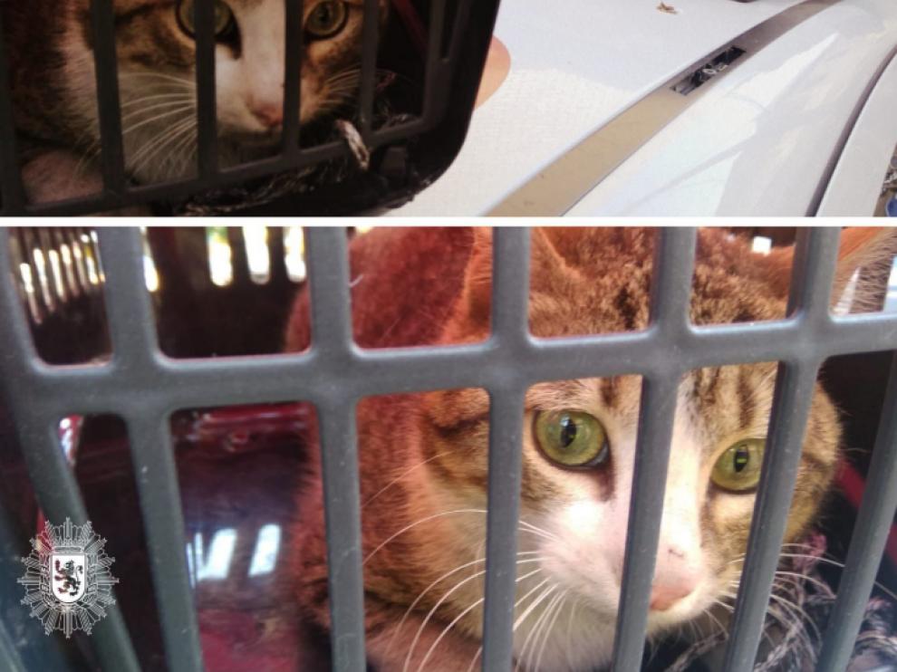 El gato fue recogido y trasladado a una protectora.