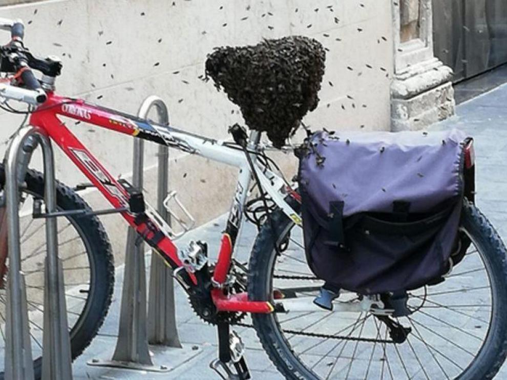 Enjambre de abejas en una bicicleta aparcada en Zaragoza.