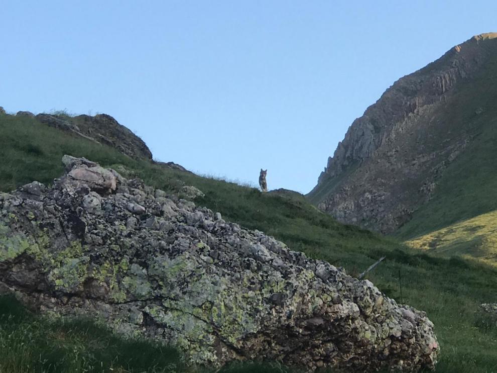 Imagen captada por los cazadores en el monte de Bisaurri.
