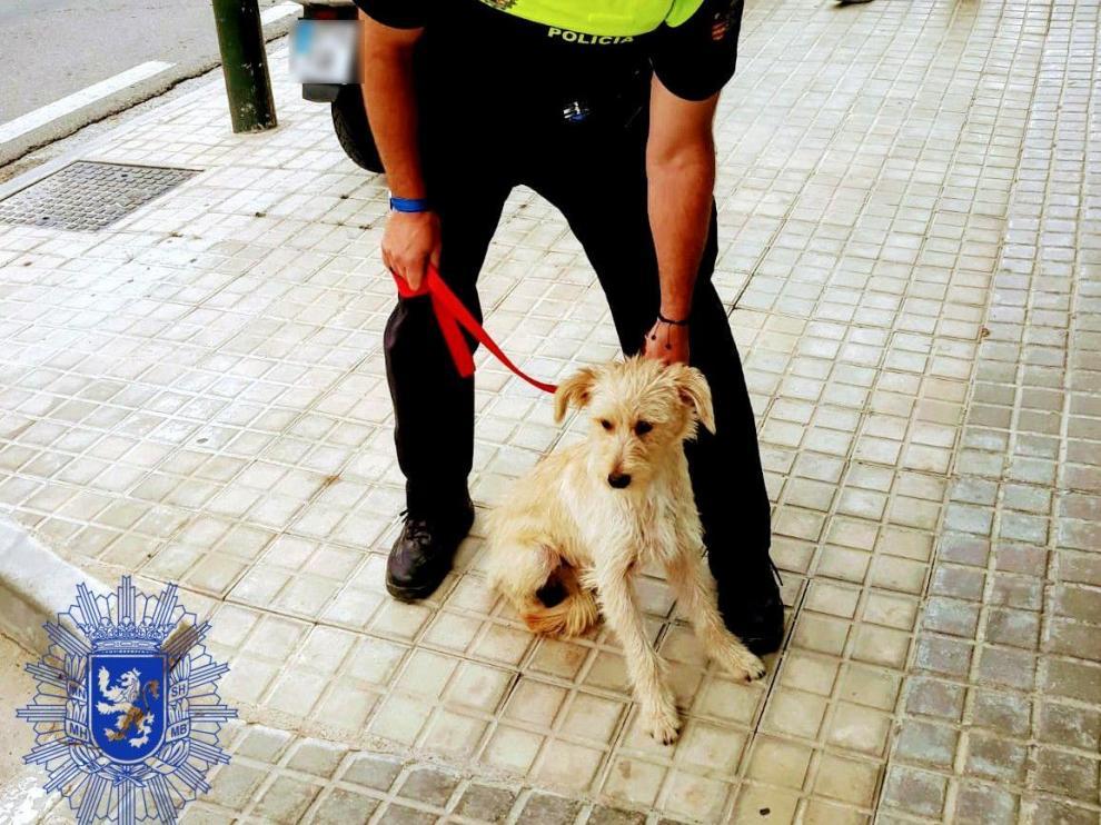La Policía rescata a un pequeño perro abandonado en la carretera de Peñaflor.