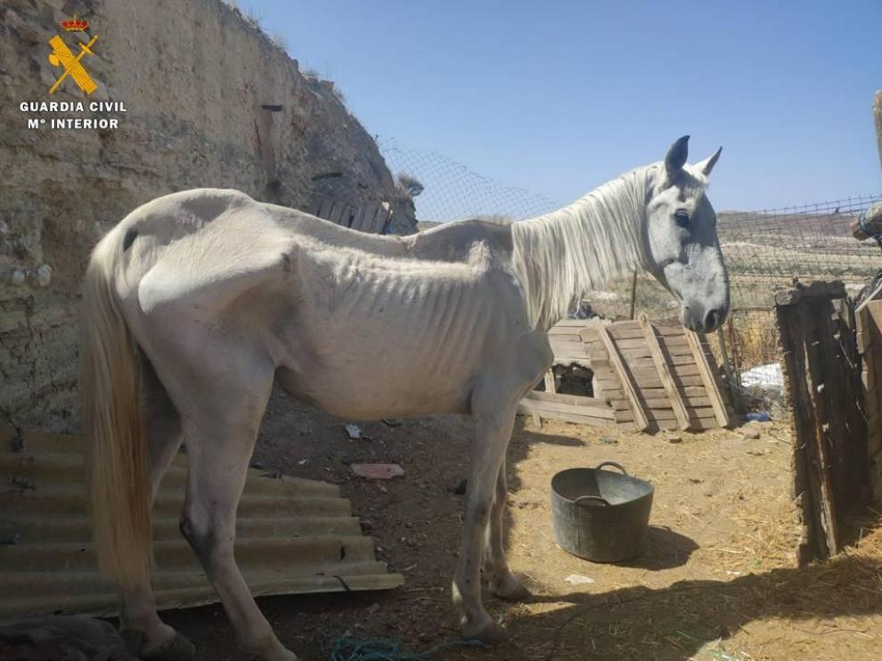 Estado en que se localizó al caballo