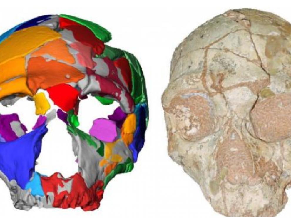 El cráneo Apidima 2, a la derecha, y su reconstrucción.