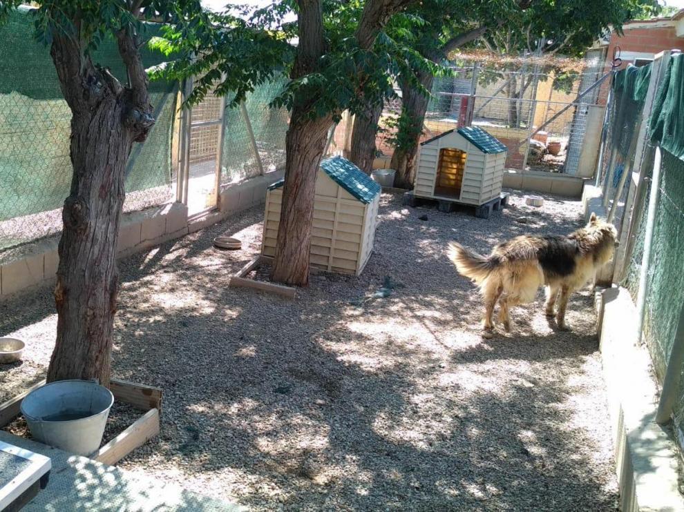 El Centro Municipal de Protección Animal de Zaragoza, este miércoles por la mañana