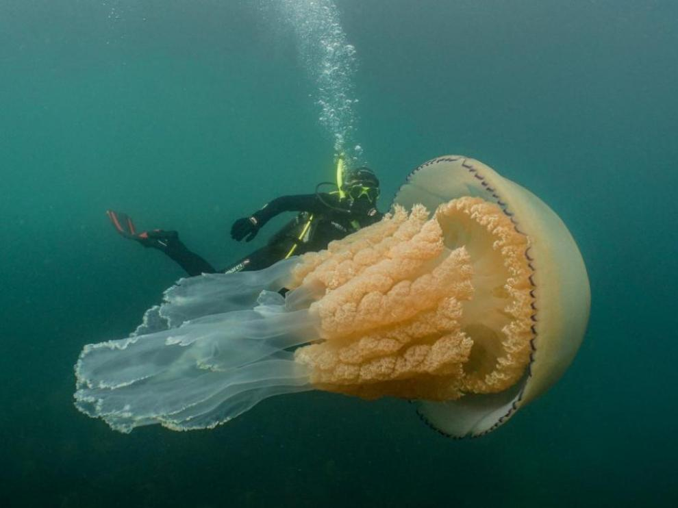 Luzzy Daly nada junto a la medusa.