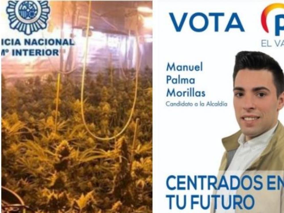Incautan a un teniente de alcalde del PP 265 plantas de marihuana.