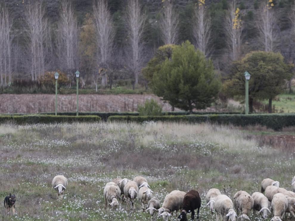 La serie 'Aragón, pueblo a pueblo' ha denunciado la despoblación.