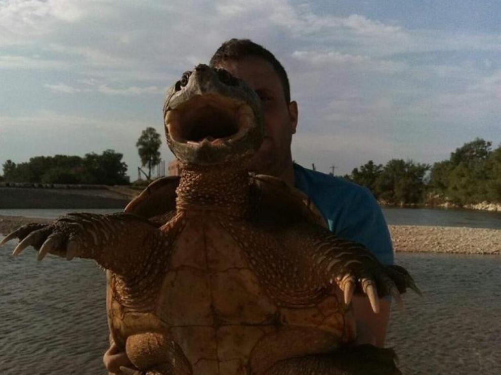 El pescador burgolés David Martínez Álvarez, con la tortuga que atrapó hace un año en la presa de Pina.