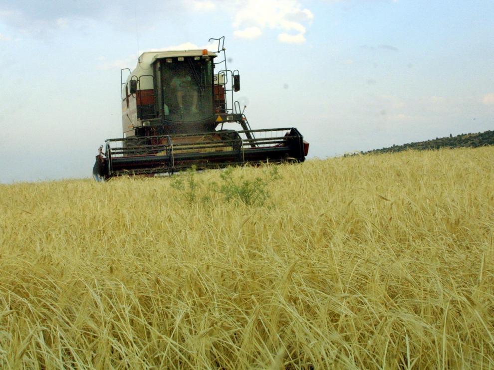 COsechadora cosechando cereal. Foto Antonio Garcia. 25-06-03 TE_cosechadora 2.jpg