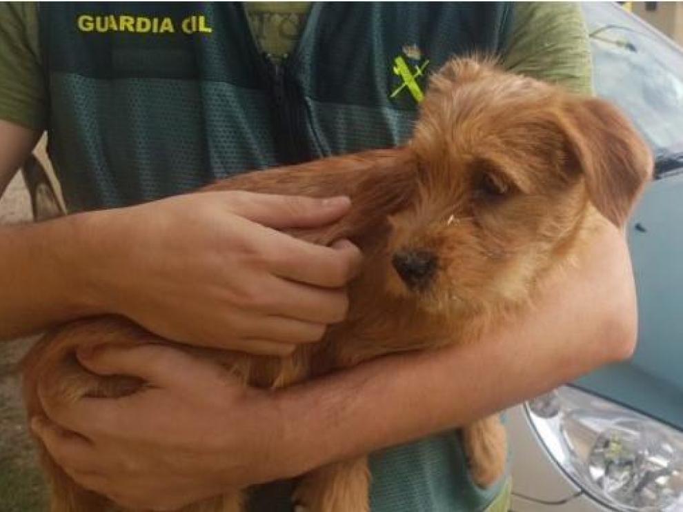 Cachorro en brazos de un agente de la Guardia Civil.