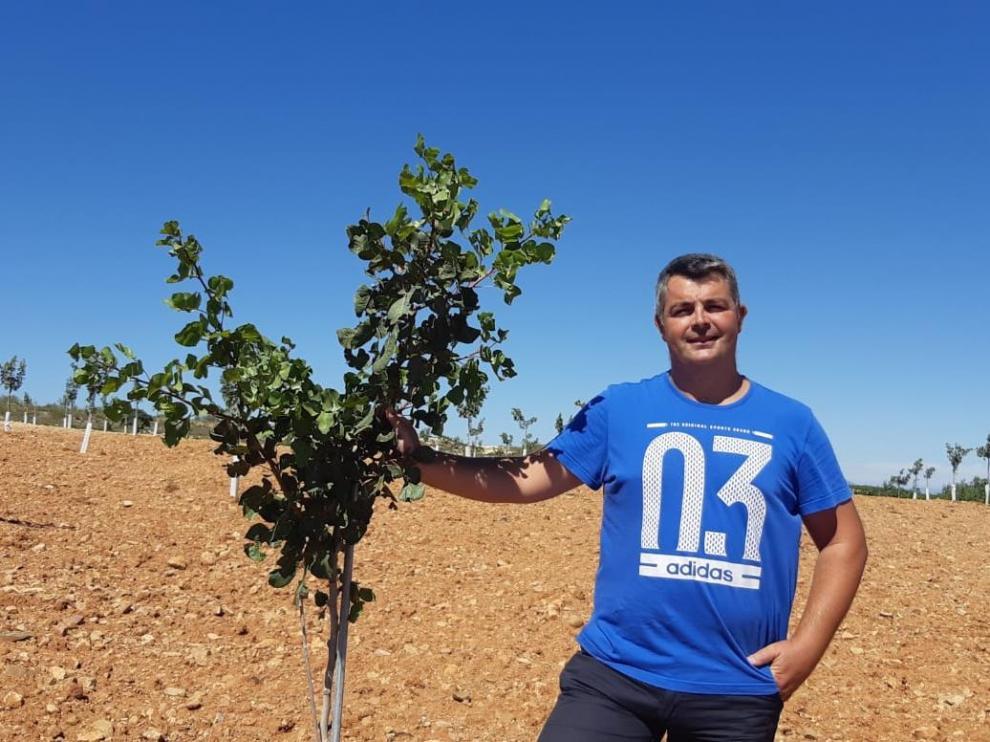 Alejandro Bribián, en su plantación de pistachos, en Cariñena.