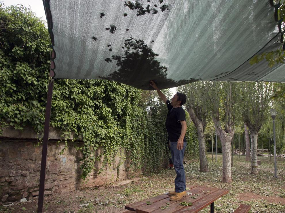 Daños que provocó la tormenta de granizo que cayó el lunes por la tarde en Illueca.