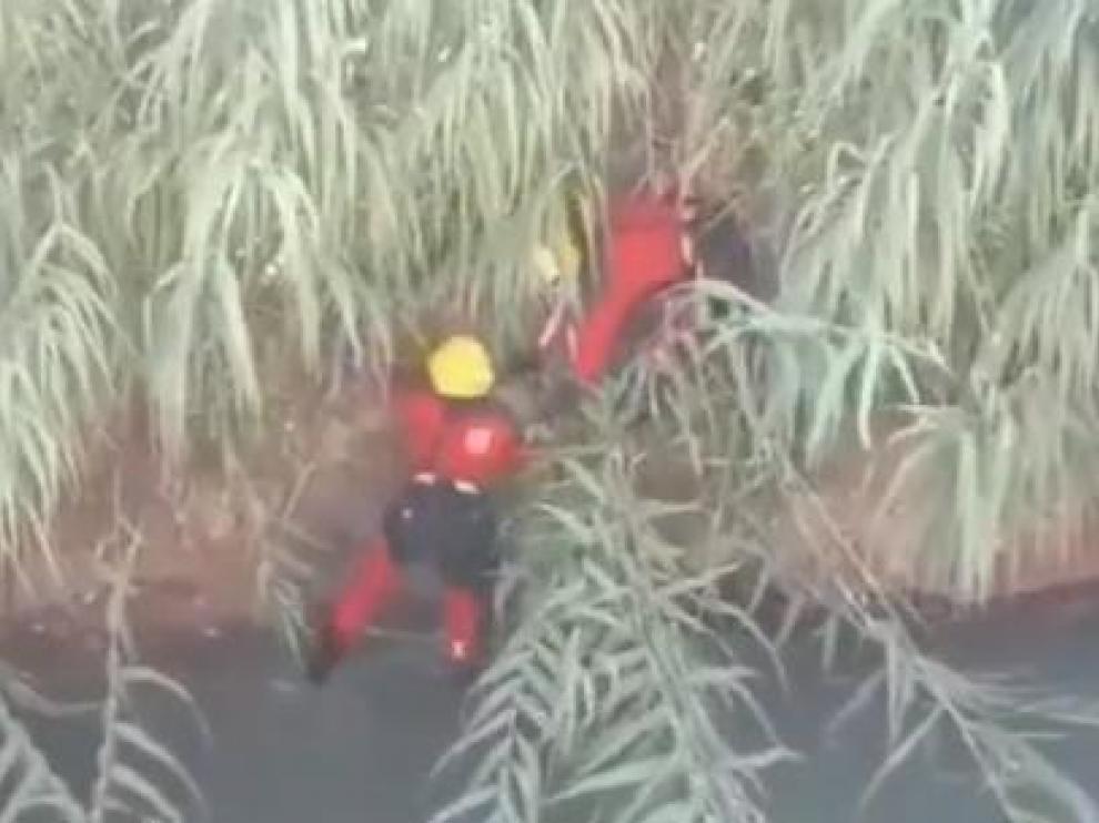 Los bomberos rescatan a un perro de raza American Staffordshire.